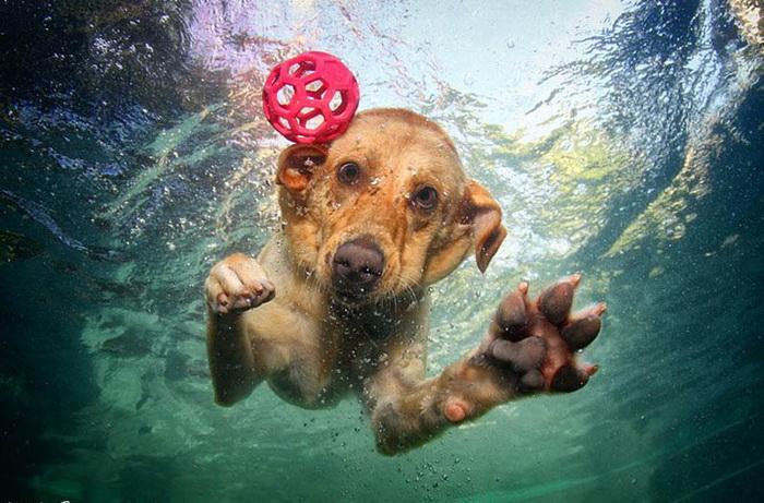 I psi z útulku se umí bavit, hlavně pod hladinou
