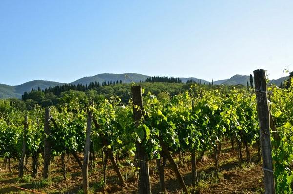 Ochutnejte lahodná BIO vína z Toskánska