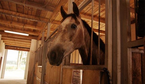 REPORTÁŽ: Na lásku ke koním nikdy není pozdě, aneb jeden den v jezdeckém areálu