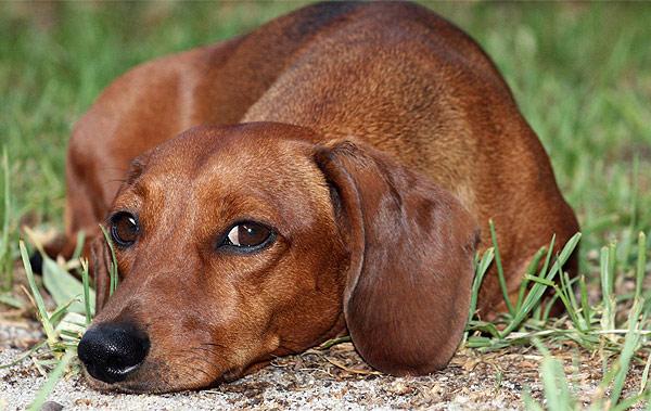 Pes – oblečený přítel člověka