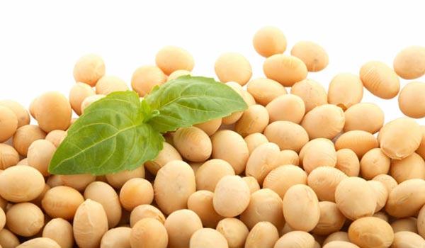 Sója a sójové produkty nejsou jen pro vegetariány